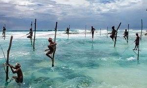 Ngư dân Sri Lanka chênh vênh trên cọc, câu cá ngoài biển