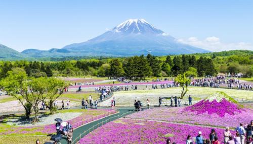 Tour du lịch Nhật Bản 4 ngày 4 đêm. Ảnh: Tugo.