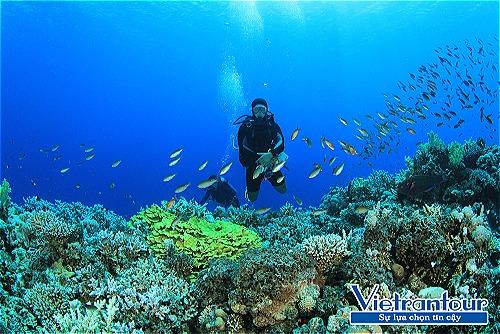 Lặn ngắm san hô phong phú nhất ở vịnh Vĩnh Hy