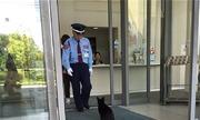 Cặp mèo cố đột nhập bảo tàng nghệ thuật Nhật Bản hàng năm trời