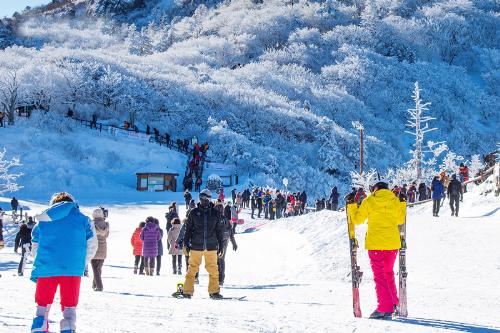 Hàn Quốc không chỉ nổi tiếng với món kim chi, rượu soju, những con đường trải thảm lá vàng& Nơi đây còn được biết đến với vẻ đẹp huyền bí của những ngọn núi, những hàng cây phủ đầy tuyết vào mùa đông.