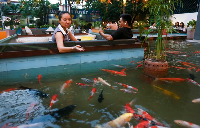 Những quán cà phê Sài Gòn nuôi cá cho khách ngồi xem
