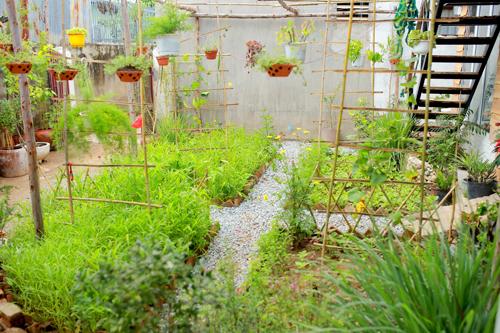 Xuất phát từ ý tưởng vườn rau xanh của riêng mình, chủ homestay đã dành một khoảng đất để trồng rau xanh cho du khách tự hái, trồng, chăm bón nếu thích.