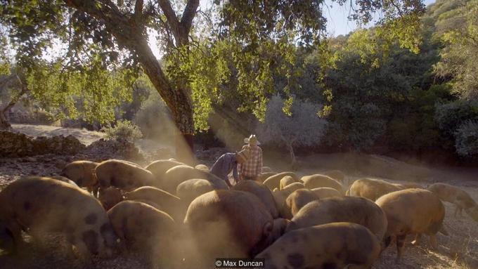 Chiếc đùi lợn muối đắt nhất thế giới mất 7 năm chế biến