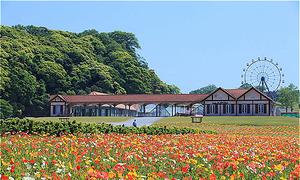 Chiba, nơi hoa nở suốt bốn mùa ở Nhật Bản