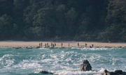 Khách Mỹ tử vong khi ra đảo của bộ tộc thấy người lạ là giết
