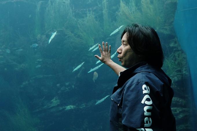 Thuỷ cung ở Nhật Bản 'hồi sinh thần kỳ' sau thảm họa sóng thần