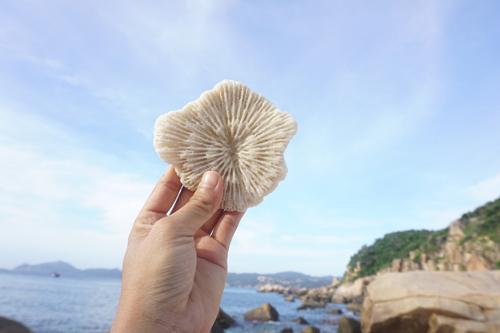 Những mẩu san hô nhỏ kỷ niệm cho chuyến đi.