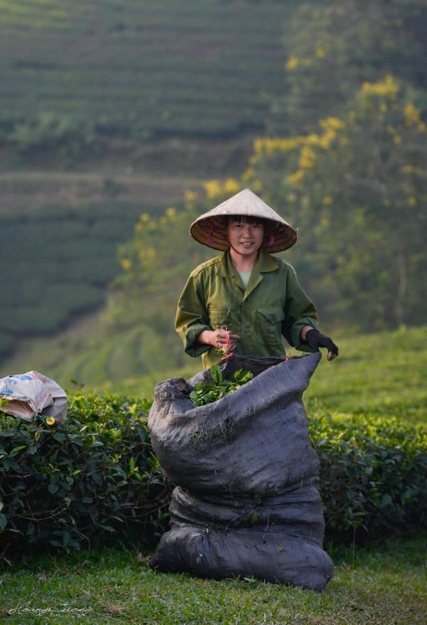 Đồi chè ở Phú Thọ được giải ảnh quốc tế giới thiệu