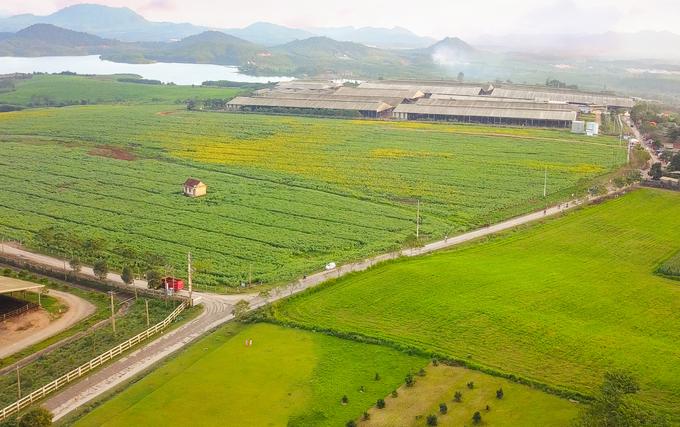Cánh đồng hoa hướng dương 60 ha ở Nghệ An bung nở