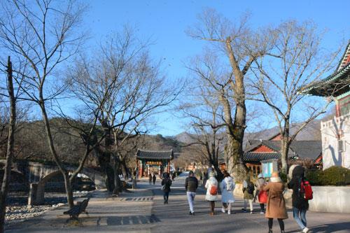 Hàn Quốc, Đài Loan là những điểm đến hút khách trong dịp tết 2019. Ảnh: Vy An.
