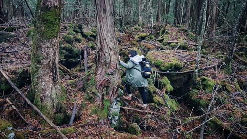 liều mình khám phá khu rừng tự sát ở Nhật Bản
