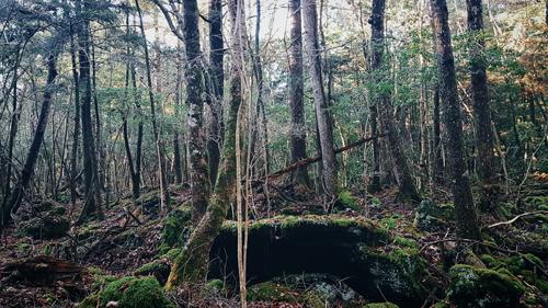 Liều mình khám phá khu rừng tự sát ở Nhật Bản - 1