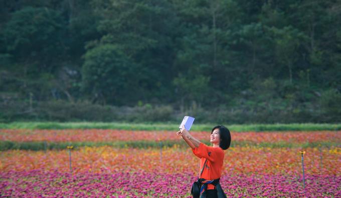 Nửa còn lại của thung lũng hoa Bắc Sơn tháng 12 là màu sắc đan xen của các giống hoa cúc, hoa cánh bướm, tam giác mạch…  Nữ du khách đến từ Hà Nội chụp ảnh trong vườn hoa giữa tháng 12. Chị Thảo, đại diện một doanh nghiệp lữ hành tại Hà Nội chia sẻ, ấn tượng ban đầu khi đến đây là không gian rộng, được nhà đầu tư giữ gìn vệ sinh khá tốt. Chị Thảo cho rằng địa điểm này phù hợp với khách nội địa và châu Á – nhóm khách có nhu cầu chụp ảnh nhiều hơn nhóm khách phương Tây.