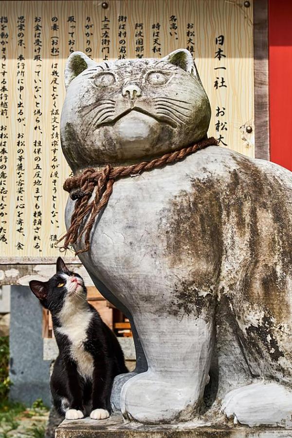 Cặp đôi dành 18 năm chụp mèo trên đường du lịch