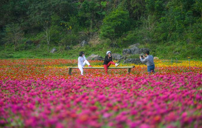 Theo chị Thu Sen, thung lũng hoa mới được mở rộng vào năm nay. Thời điểm 2017 khi vườn hoa bắt đầu mở cửa, diện tích khai thác chỉ khoảng 6 ha, bằng 1/3 so với hiện tại.