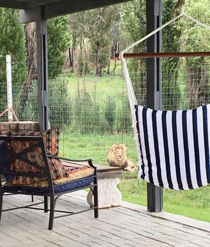 Tại nhà nghỉ này, du khách có thể quan sát sư tử ở khoảng cách gần, từ 1-2m. Ảnh: Sun.