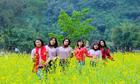 Cánh đồng hoa cải vàng 10.000 m2 nở rộ ở Ninh Bình