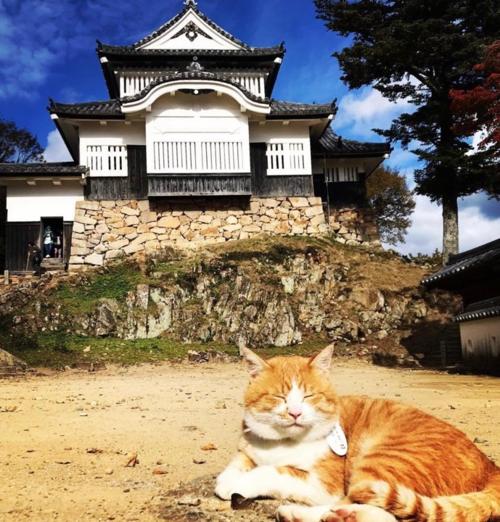 Lâu đài Bitchu Matsuyama được xây dựng từ năm 1240 trên ngọn núi cao 430 m, đây là lâu đài cao nhất có một tòa tháp tại Nhật Bản. Ảnh: @sanju_ro_/Instagram.