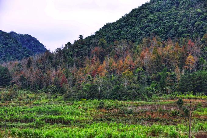 Mùa cây đổ lá vàng ở Cao Bằng