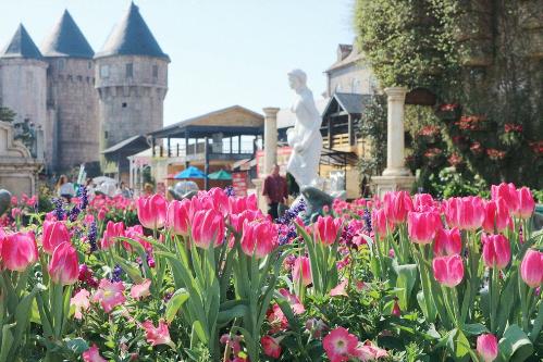 Khu vườn một triệu bông tulip đón Tết trên đỉnh Bà Nà - ảnh 6