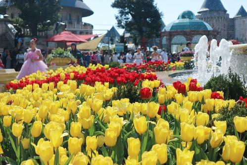Khu vườn một triệu bông tulip đón Tết trên đỉnh Bà Nà - ảnh 7