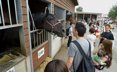 Du khách đến xem đua ngựa còn có thể tham quan chuồng ngựa. Ảnh: Navitime.