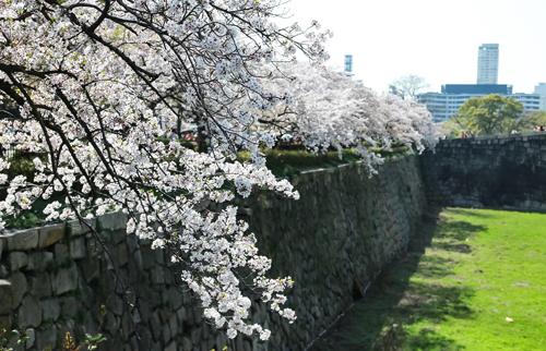 Dịp đầu xuân se lạnh, hoa anh đào rực rỡ thích hợp cho các chuyến du ngoạn.