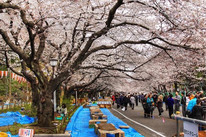 7 công viên ngắm hoa anh đào nổi tiếng của Nhật Bản