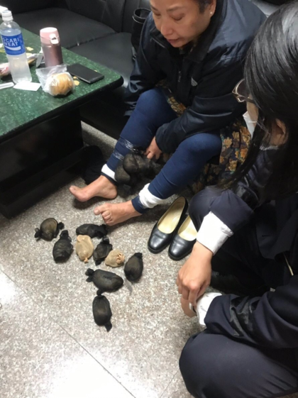 Những con chuột bị nhốt trong túi lưới và buộc vào chân bà Ngô. Ảnh: Lực lượng bảo vệ bờ biển Đài Loan.