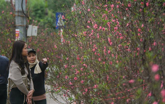 Chợ dài 2 km bán những cây đào hàng chục triệu đồng ở Hà Nội
