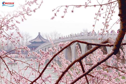 Hoa đào nở bung rộ khắp các nẻo đường ở công viên Trung Quốc. Ảnh: Shutterstock.