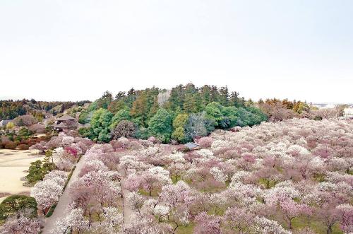 Hay cùng dừng chân để vãn chùa và cầu chúc một năm mới bình an tại ngôi đền Nikko Toshogu 400 tuổi. Đây là nơi thờ vị tướng quân Tokugawa nguy nga nhất xứ Phù Tang nằm giữa những rặng thông cao vút.