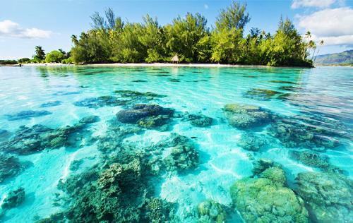 Nằm cách bờ biển phía Đông Nam của Phuket khoảng 3km,đảo Coral(hay đảo San Hô) sở hữu hơn 4,5km bờ biển với hơn 90% diện tích được phủ bởi rừng nguyên sinh cùng hệ thống động thực vật phong phú. Điểm thu hút du khách nhất tại đây làchương trình lặn biển ngắm san hô, nhờ cónhiều rặng san hô đẹp cùng những sinh vật biển đa dạng. Ngoài ra, bạn còn có thểtự do trải nghiệm bờ cát trắng, bãi biển nước trong tới tận đáy, cũng như tham gia một số môn thể thao nhưđua ca nô, đi xe trượt nước, nhảy dù trên biển, lướt sóng...