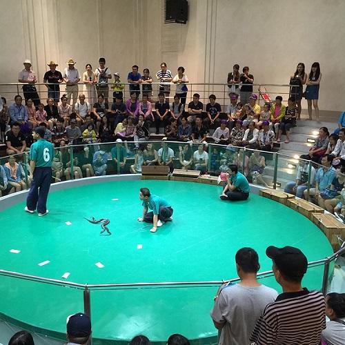 Đến vớiTrung tâm Nghiên cứu Rắn độc Hoàng giaThái Lan (thuộc Đại học Chulalongkorn, tọa lạc tại một vùng ngoại ô thủ đô Bangkok), du khách đượcthưởng thứcbuổi biểu diễn đặc biệt do những chú rắn thực hiện. Sau khi xem biểu diễn, du khách có thể tham quan phòng trưng bày các sản phẩm được chế biến từ rắn và được nghe thuyết trình về sự sinh sản,chu kỳ phát triển của rắn; sự nguy hiểm cũng như công dụng của rắn...Khách tham quan cũng có thểchạm vào những chú rắn và lưu lại những tấm ảnh độc đáo cùng với loài bò sát nguy hiểm này.