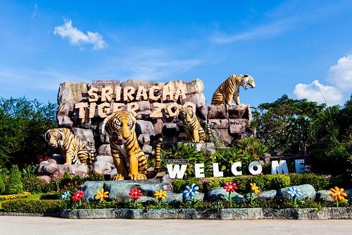 Là một vườn thú ở Sri Racha - vùng ngoại ô của Pattay -công viên Tiger Zoolà một trong những điểm tham quan được nhiều du khách nước ngoài biết đến tại Thái Lan. Công viên có diện tích khoảng 400.000m2, nơi đang chăm sóc cho hơn 200 chú hổ và là đại gia đình của cá sấu, voi và khỉ.Không nhữngtận mắt thấy sinh hoạt của những chú hổ to lớn, du khách cònđược đùa giỡn, choăn và chụp hình với hổ có người quản lý đi theo.