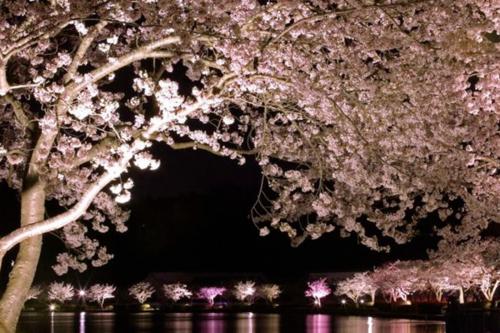 Hồ Senbako: với hàng trăm cây hoa anh đào được trồng xung quanh hồ, mỗi khi diễn ra lễ hội, xung quanh hồ sẽ được chiếu sáng với ánh đèn lấp lánh.