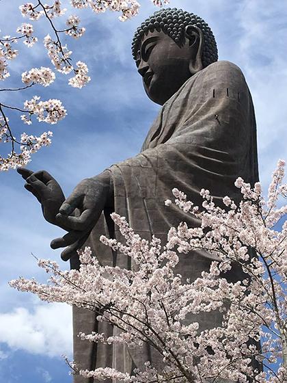 Đại tượng phật Ushiku Daibutsu được sách Guinness công nhận là tượng phật bằng đồng cao nhất thế giới. Xung quanh bức tượng phật là giống hoa anh đào Sakura và hoa chi anh (Chiba- zakura) nở rộ.