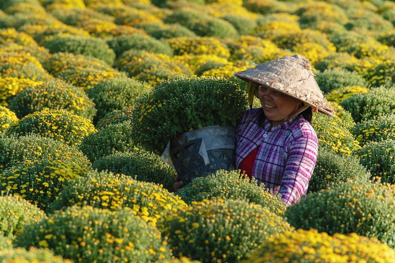 Khoảnh khắc mùa xuân trên khắp nẻo đường Việt Nam