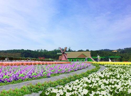 Những cánh đồng hoa hấp dẫn du khách đến với thành phố Đà Lạt.