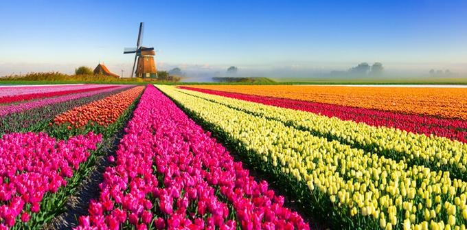 Loài hoa biểu tượng của các nước trên thế giới