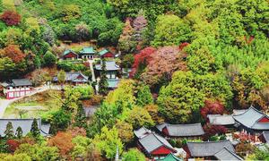 Vẻ đẹp thơ mộng dưới chân 'dãy Apls' của Hàn Quốc