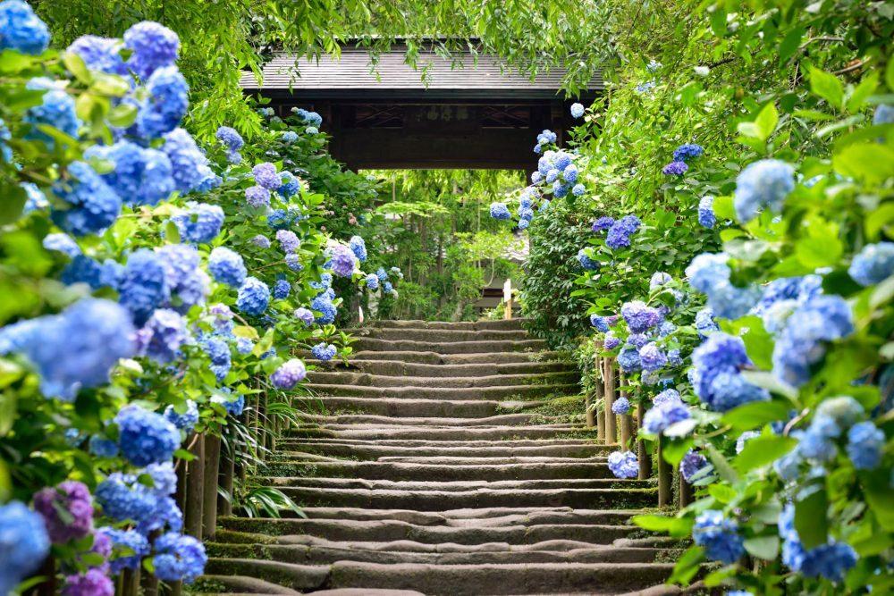 12 loài hoa tượng trưng 12 tháng ở Nhật Bản