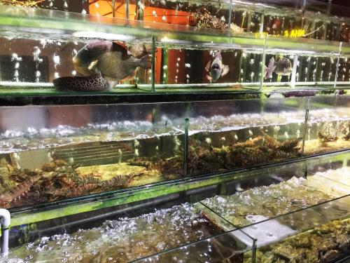 Nha Trang View là nhà hàng hải sản có hồ hải sản tươi sống lớn nhất tại vịnh Nha Trang. Nhà hàng có view nhìn ra toàn vịnh Nha Trang tuyệt đẹp và được Tripadvisor bình chọn là nhà hàng dịch vụ tốt nhất trong hai năm liền 2017 và 2018.