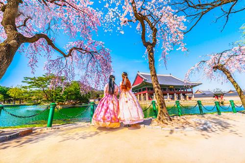 Đến Hàn Quốc mùa xuân, du khách sẽ cảm nhận hương hoa ngọt ngào tràn ngập không gian, từ trung tâm đến những vùng quê tĩnh lặng.