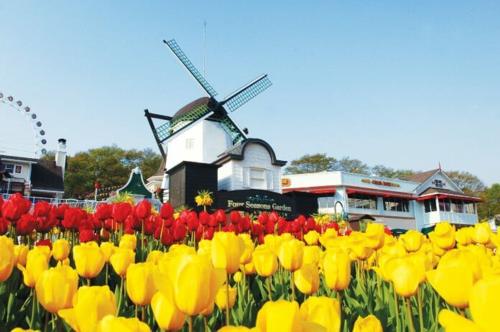 Công viên Everland mùa hoa Tulip tháng 5. Ảnh: hyundaiilbo.