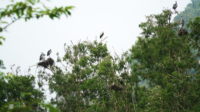 Một ngày lênh đênh trên đò, ngắm chim ở Thung Nham
