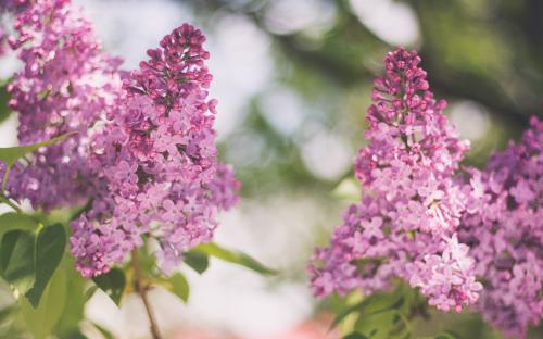 Khám phá thiên đường Hokkaido mùa hoa nở - 1