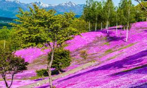 Khám phá thiên đường Hokkaido mùa hoa nở
