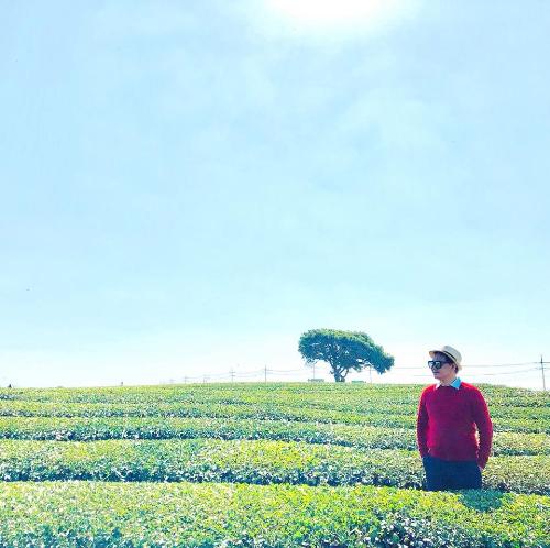 Tận hưởng không gian khoan khoái thanh mát và tinh khiết của hương trà xanh tại O'sulloc Tea Museum.